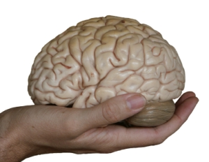 Your Brain on a Hand